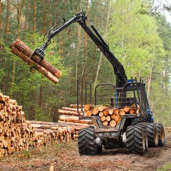 Waldarbeiten